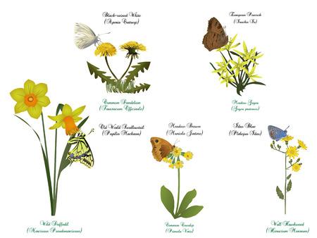 Butterflies set - on yellow flowers Illustration
