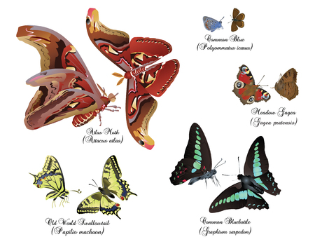 in common: Amazing insect set - pairs