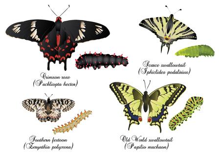 swallowtails: Amazing butterflies set - Swallowtails