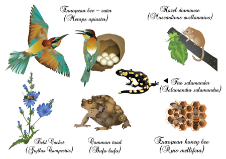 Amazing nature set - European animals. Illustration