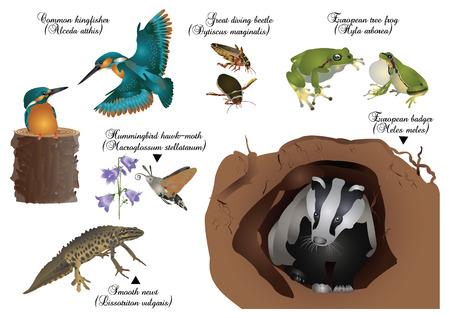 newt: Amazing nature set - European animals