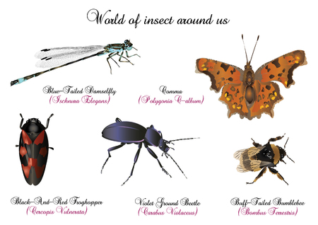 comma: World of insect around us