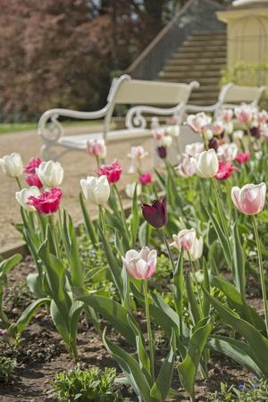 Beautiful tulips 写真素材