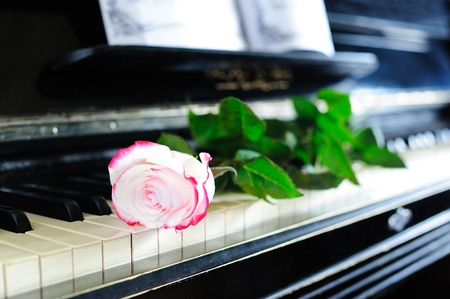 Beautiful red-and-white rose on the old piano keyboard