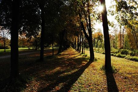 limetree: Sunny autumn lime-tree alley