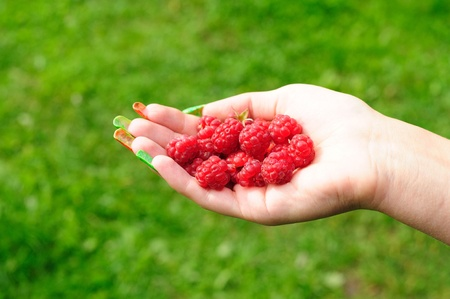 Handful of raspberry Stock Photo - 10512057