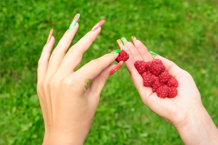 Picking one raspberry out of the handful Stock Photo - 10512055