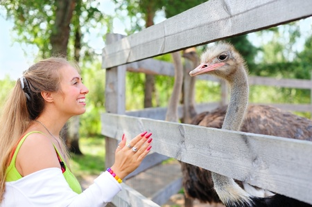 Tourist communicating to an ostrich in the zoo
