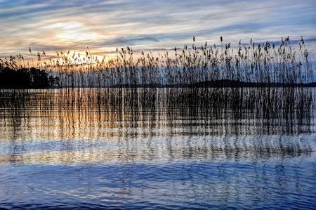 Paysage avec des roseaux au coucher du soleil