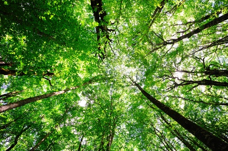 Reaching sky decidious sunny forest background
