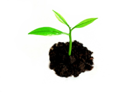 bourgeon: Growing sprout against white background