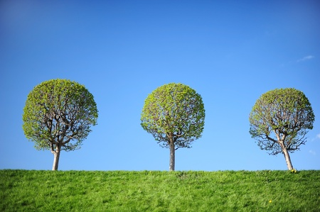 Three young trees against blue sky background photo