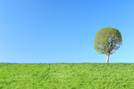 alfresco: Young tree in spring Stock Photo