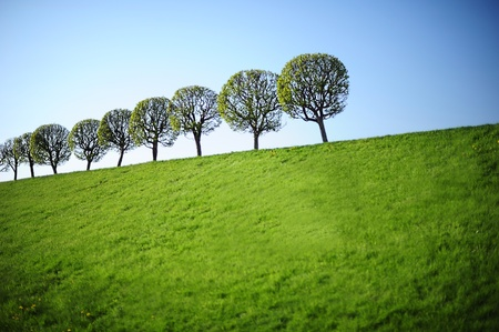 Row of young green trees