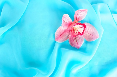 Pink orchid on blue chiffon photo