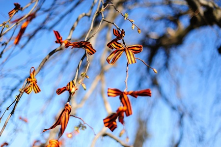 SAINT-PETERSBURG, RUSSIA - MAY 9: Ribbons of St. George (symbols of victory in World War II) on tree branches on Piskaryovskoye Memorial Cemetery on May 9, 2011 in Saint-Petersburg, Russia