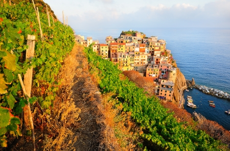 Sunset in Manarola, a beautiful village in the National park of Cinque Terre, Italy photo