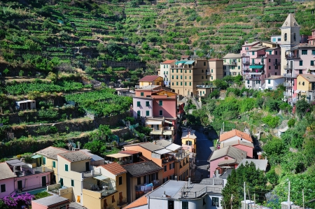 Italian mountain village Manarola stretching in vineyards (Cinque Terre, Italy)