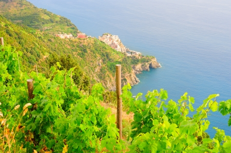 Scenery of Italian village Manarola with vines in the foreground photo