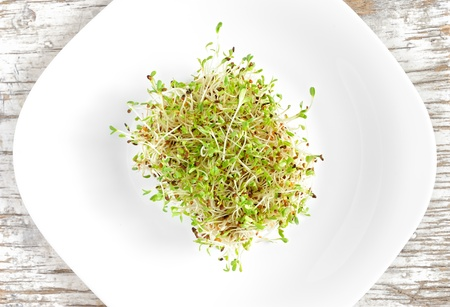 medicago: Sprouted seeds of alfalfa served on a white plate, top view