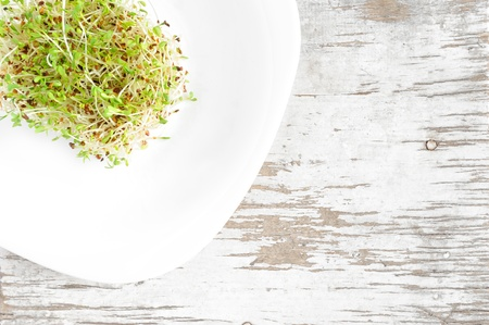 medicago: Eco food - sprouted seeds of alfalfa served on a white plate