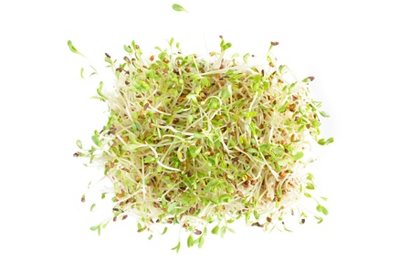 Coached seeds of alfalfa (also called Medicago or lucerne) against white background,