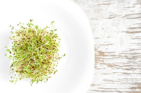 medicago: Sprouted grains of alfalfa served on a white plate   Stock Photo