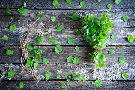marjoram: Fresh oregano herb on a wooden background