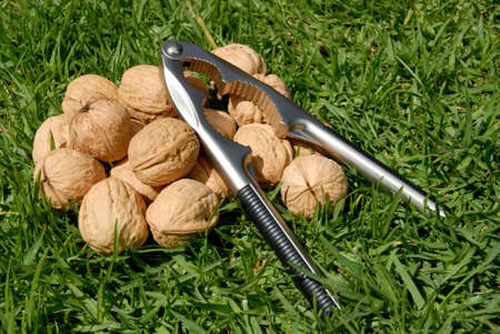 splitting: the walnuts and the tool for their splitting on the grass