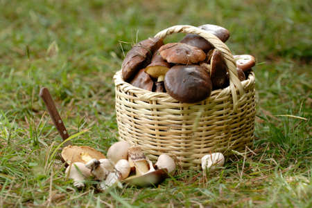 basketful: the basket with a mushrooms Stock Photo