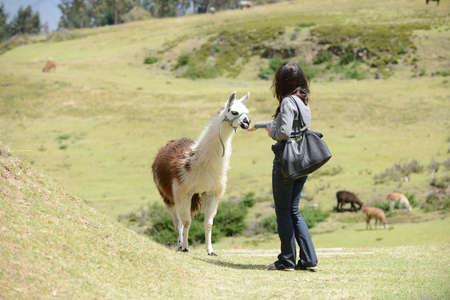 quechua indian: Llama and a woman