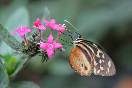 bluebell woods: The tropical colorful butterfly on the flower closup picture.