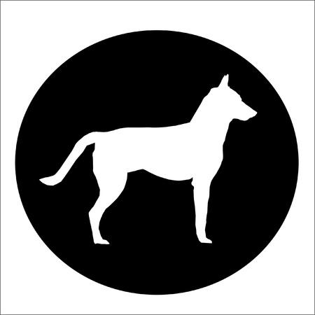 White Dog in Black circle photo