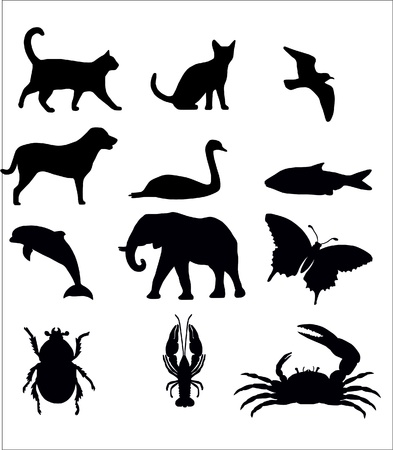 Selection of Animals Vector