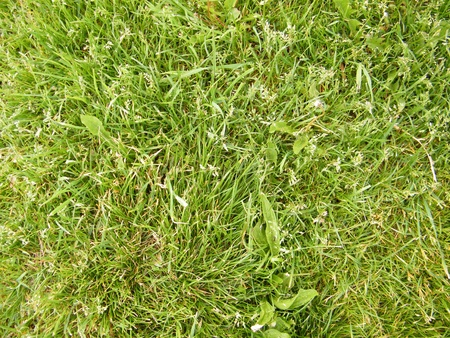 Green grass texture zoom in photo