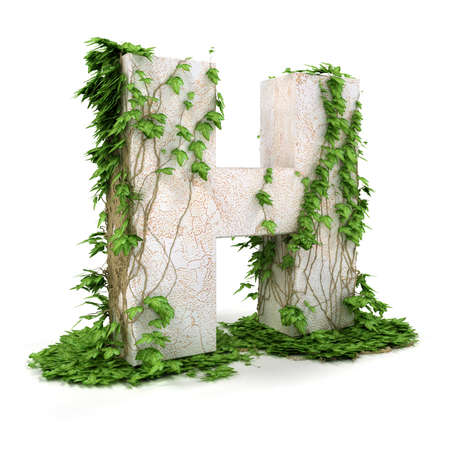 concretion: Letter H threads covered with ivy isolated on white background. Stock Photo
