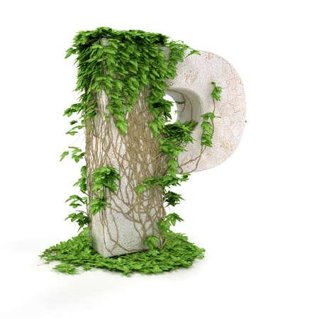 ivies: Discussioni di lettera p ricoperta di edera isolato su sfondo bianco. Archivio Fotografico