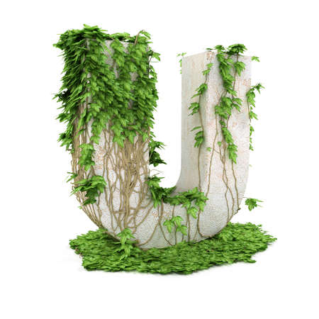 letter u: Letter U threads covered with ivy isolated on white background.