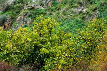 fruiting: fruiting wild trees Stock Photo