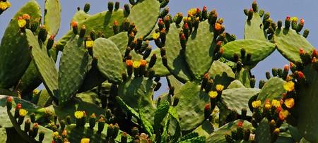 plantas del desierto: plantas del desierto