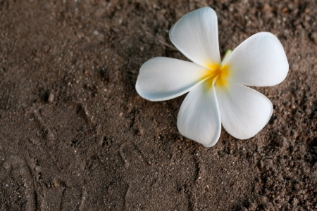 Frangipani on sand Stock Photo - 14006901