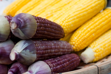 Corn in two baskets Stock Photo - 14232739