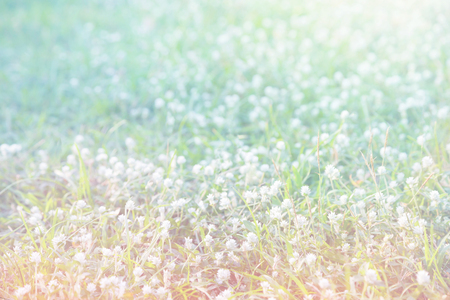 spring of meadow with filter Stock Photo