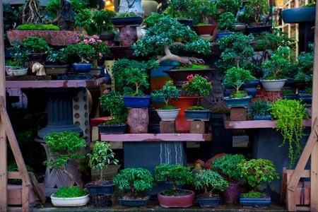 盆栽は、鉢に植えられました。ソート多くをだった。