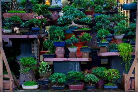 Bonsai trees were planted in pots. And was many sorted.