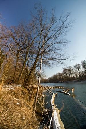 waterside: Waterside of the river Aare