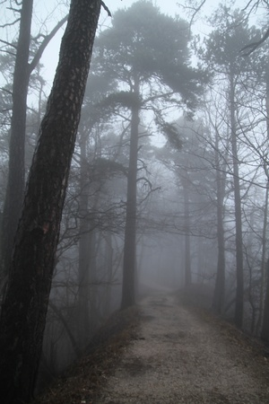 Path to the foggy unknown Stock Photo - 12983683