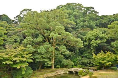 Stone bridge in Japanese garden at Isahaya, Japan Stock Photo - 10003934