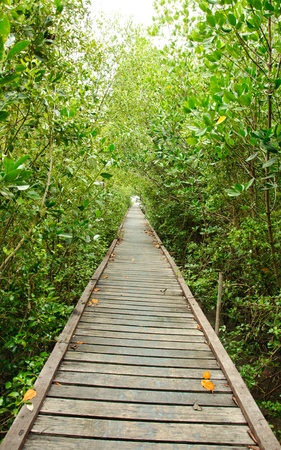 Wooden walkway in Mangrove forest at Petchabuti, Thailand Stock Photo - 10279718