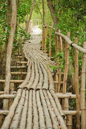 Bamboo walkway in Mangrove forest at Petchabuti, Thailand Stock Photo - 10279692
